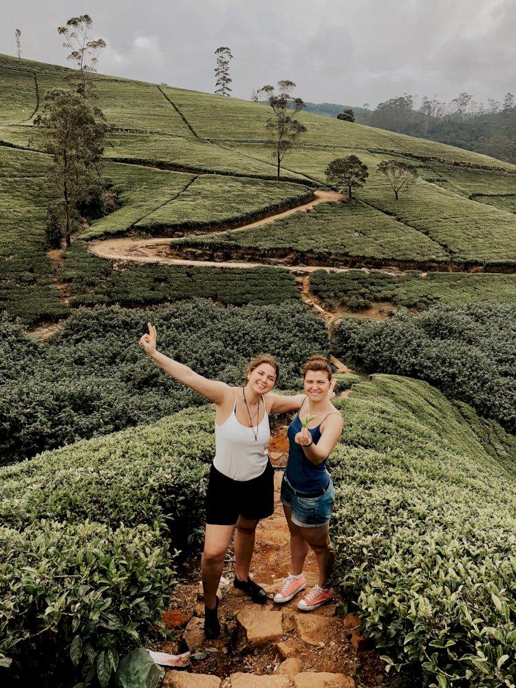 Arbatų plantacijoje Šri Lankoje